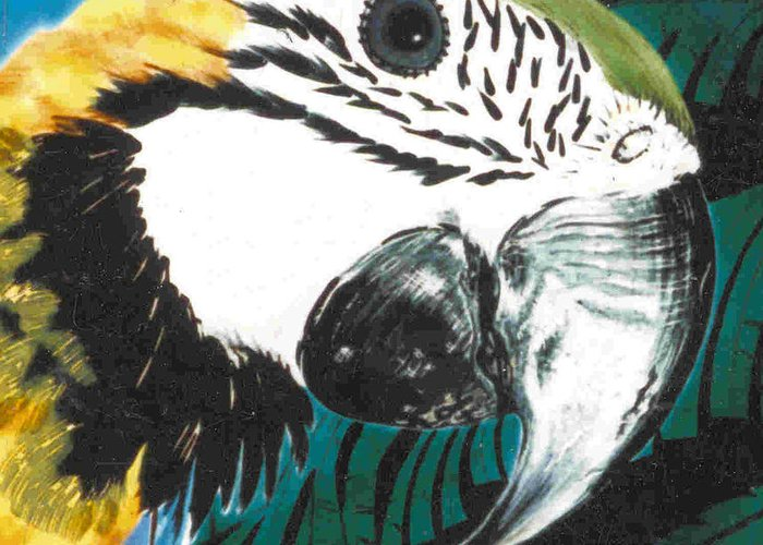 Macaw Greeting Card featuring the painting Blue And Gold Macaw by Dy Witt