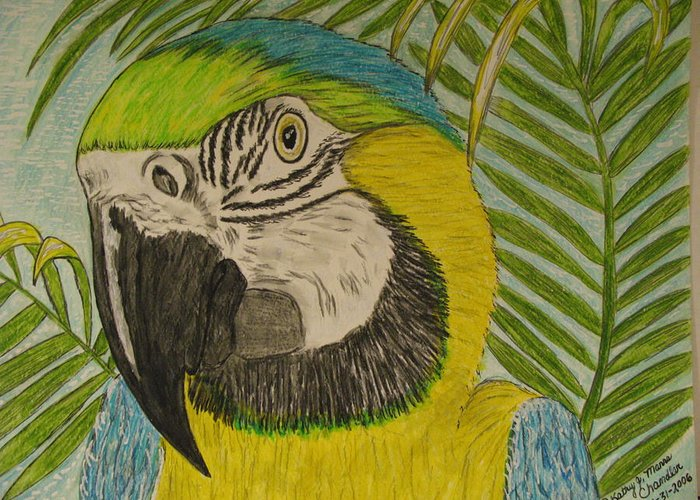 Macaw Greeting Card featuring the painting Blue and Gold Macaw Parrot by Kathy Marrs Chandler