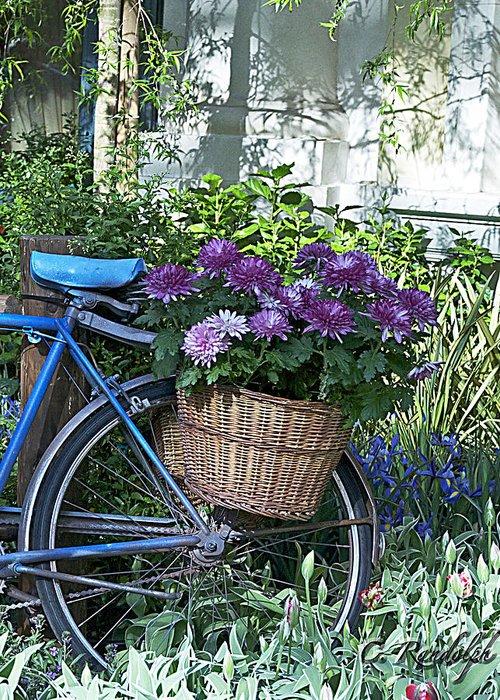 Blue Bike Greeting Card featuring the photograph Blue Bike by Cheri Randolph
