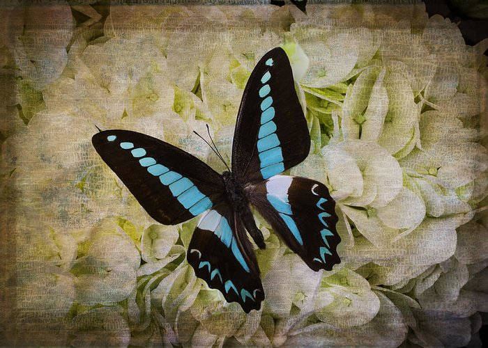 White Greeting Card featuring the photograph Blue Black Butterfly Dreams by Garry Gay