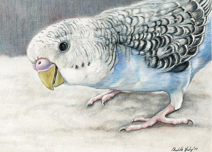 Bird Greeting Card featuring the painting Blue Budgie by Charlotte Yealey