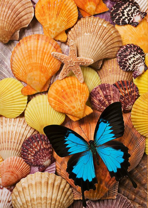Butterfly Greeting Card featuring the photograph Blue Butterfly And Sea Shells by Garry Gay