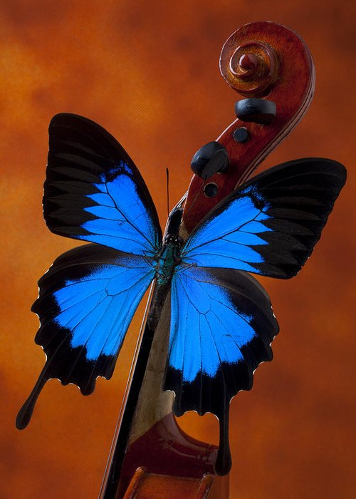 Blue Butterfly Greeting Card featuring the photograph Blue Butterfly On Violin by Garry Gay