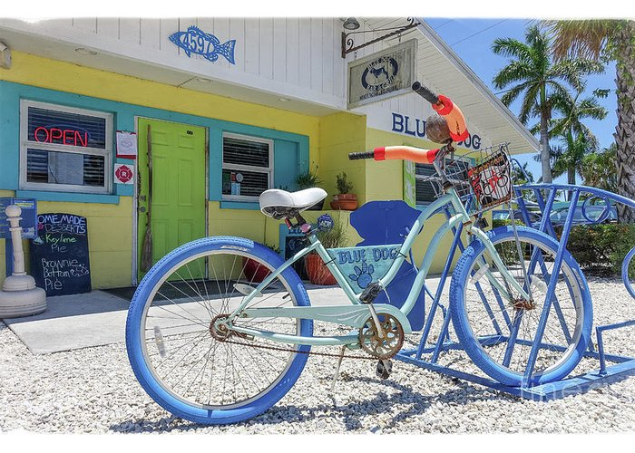 Florida Greeting Card featuring the photograph Blue Dog Matlacha Island Florida by Edward Fielding