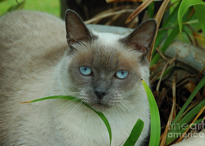 Cat Greeting Card featuring the photograph Blue Eyes In The Garden by Kathi Shotwell