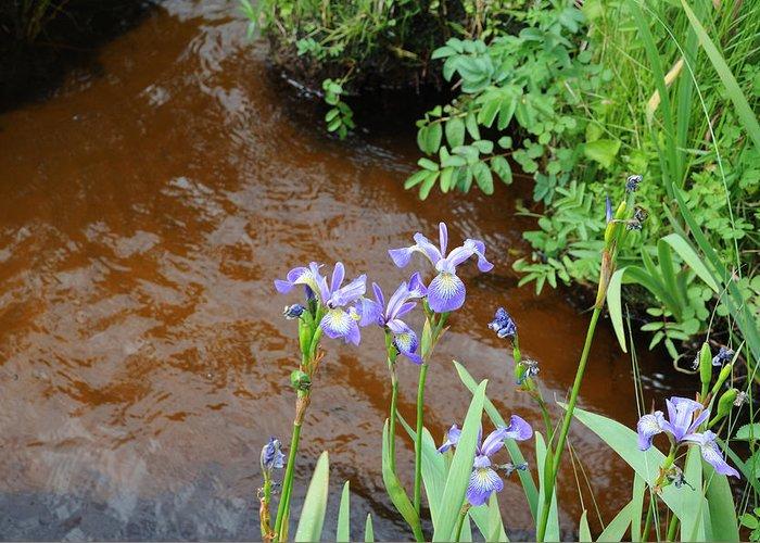 Iris Greeting Card featuring the photograph Blue Flag Iris by Terese Loeb Kreuzer