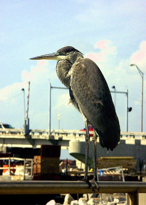 Bird Greeting Card featuring the photograph Blue Heron by Dean Corbin