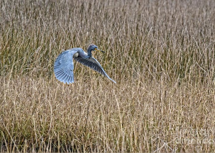 Blue Heron Greeting Card featuring the photograph Blue Heron In Flight 1588c by Cynthia Staley