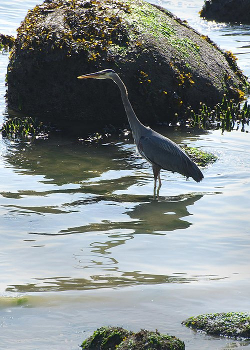 Seascape Greeting Card featuring the photograph Blue Heron by Richard Henne