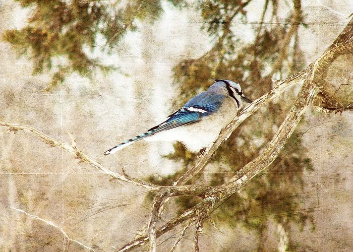 Blue Jay Greeting Card featuring the digital art Blue Jay by Cassie Peters