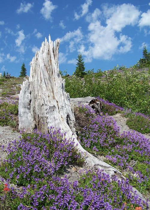 Tree Stump Greeting Card featuring the photograph Blue Lupine by Gene Ritchhart