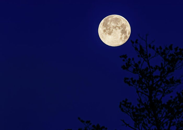 Full Moon Greeting Card featuring the photograph Blue Moon by Joe Holley