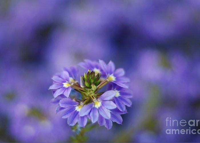 Macro Greeting Card featuring the photograph Blue On Blue by Catherine Lau