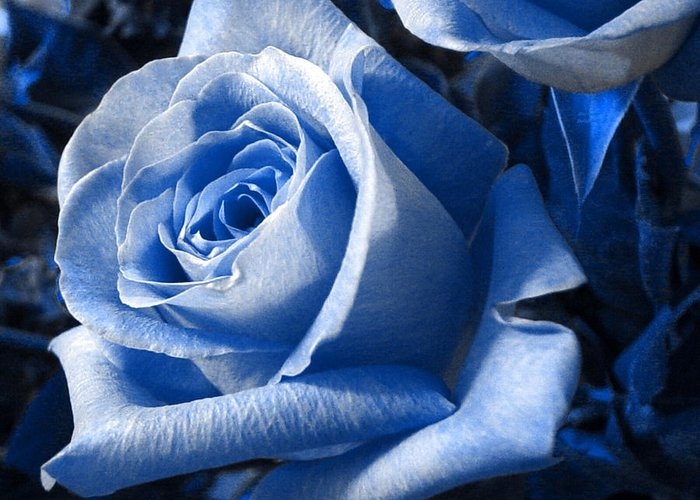 Blue Greeting Card featuring the photograph Blue Rose by Shelley Jones