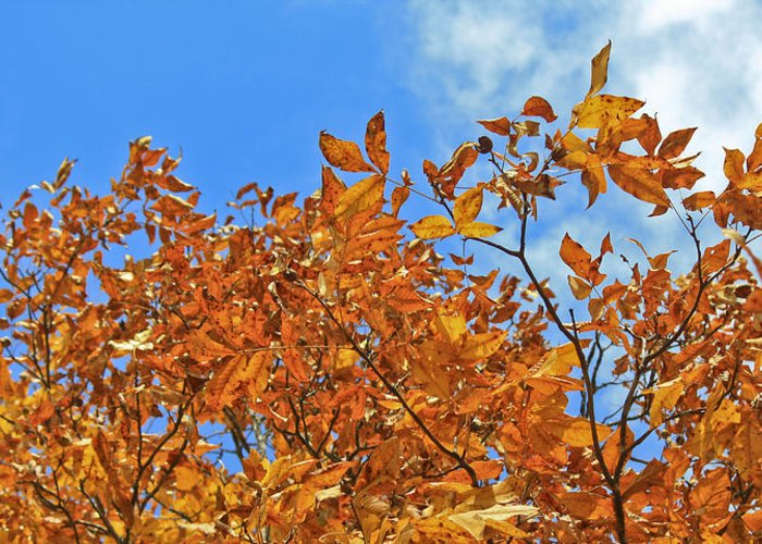 Fall Greeting Card featuring the photograph Blue Sky by Teresa Mucha