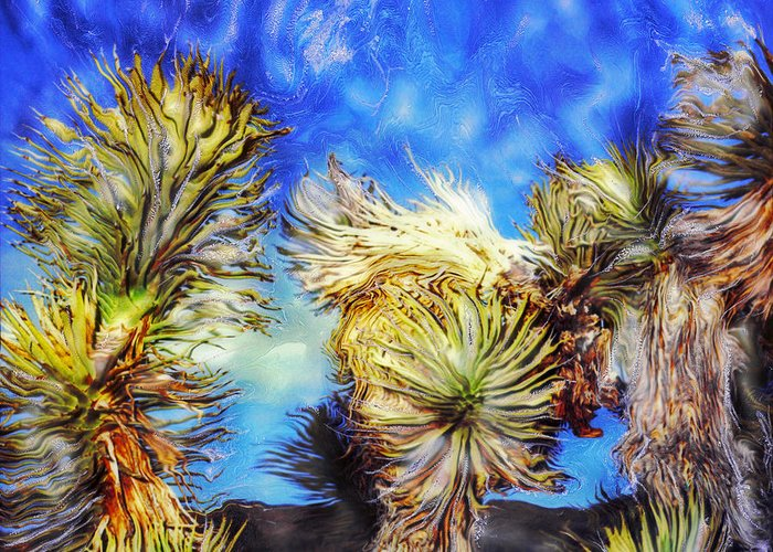 Paul-tokarski Greeting Card featuring the photograph Blue Sky Yucca by Paul Tokarski