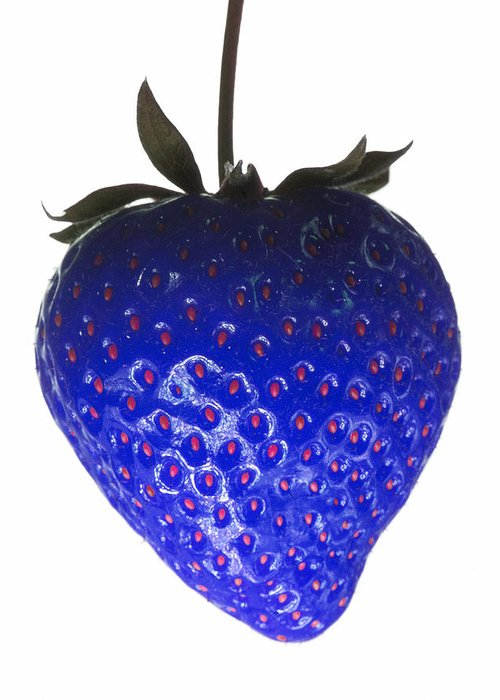 Blue Strawberry Greeting Card featuring the photograph Blue Strawberry by Tim Booth