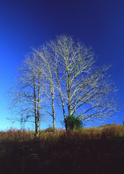 Landscape Greeting Card featuring the photograph Blue Tree In Tennessee by Randy Oberg
