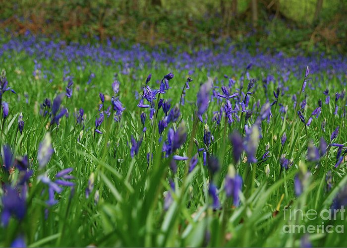 Greeting Card featuring the photograph Bluebell Blanket by Richard Gibb