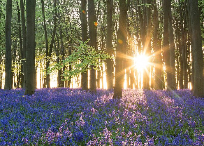 Hyacinthoides Non-scripta Greeting Card featuring the photograph Bluebell Dawn by Chris Deeney