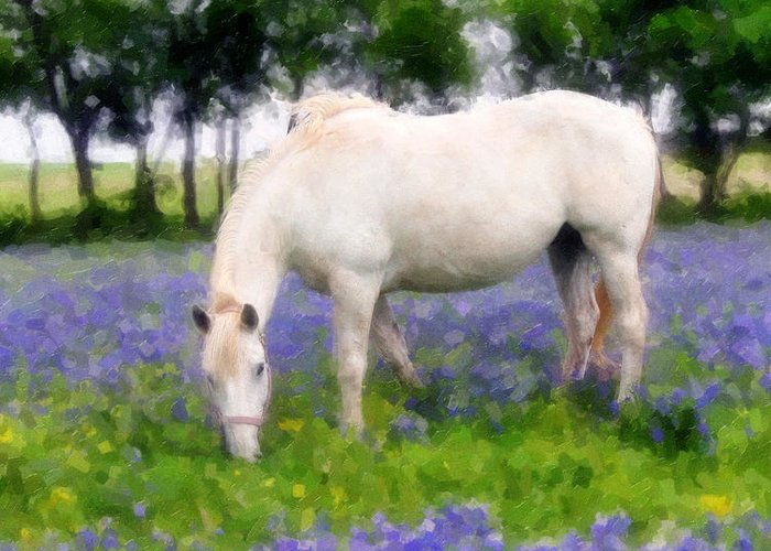 Horse Greeting Card featuring the photograph Bluebell Lunch by Nick Sokoloff