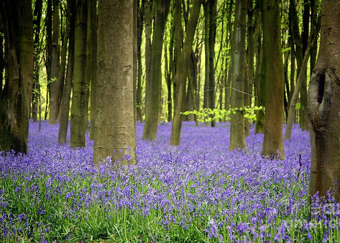 April Greeting Card featuring the photograph Bluebells by Jane Rix