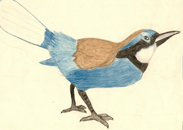 Color Pensils Greeting Card featuring the drawing Bluebird by George I Perez