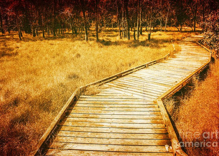 Marsh Path Greeting Cards