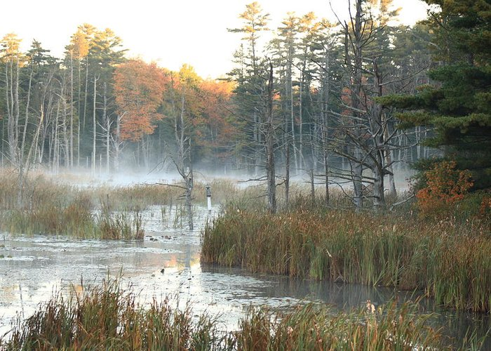 Landscape Greeting Card featuring the photograph Bog Fog by Doug Mills