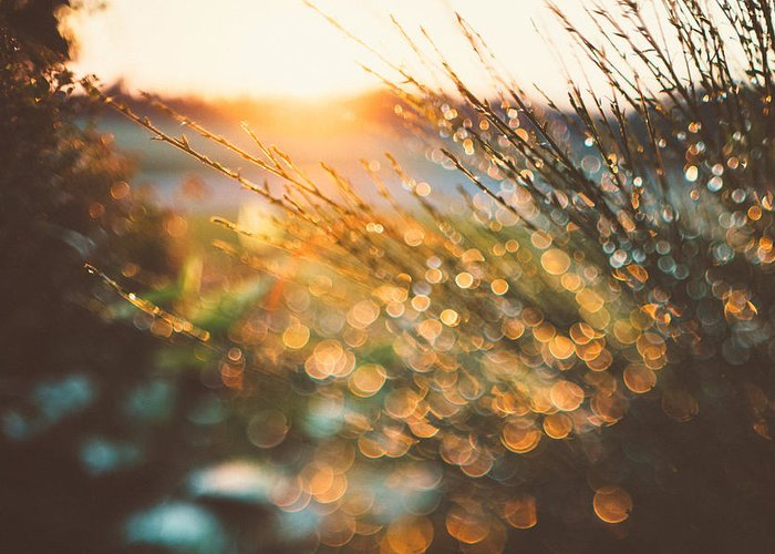 Bokeh Greeting Card featuring the photograph Bokeh 2 by Tracy Jade