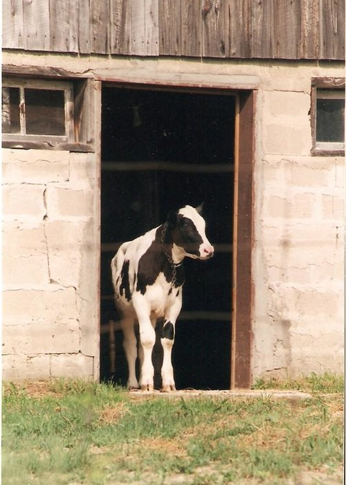 Calf Greeting Card featuring the photograph Bonjour Mon Ami - Photograph by Jackie Mueller-Jones
