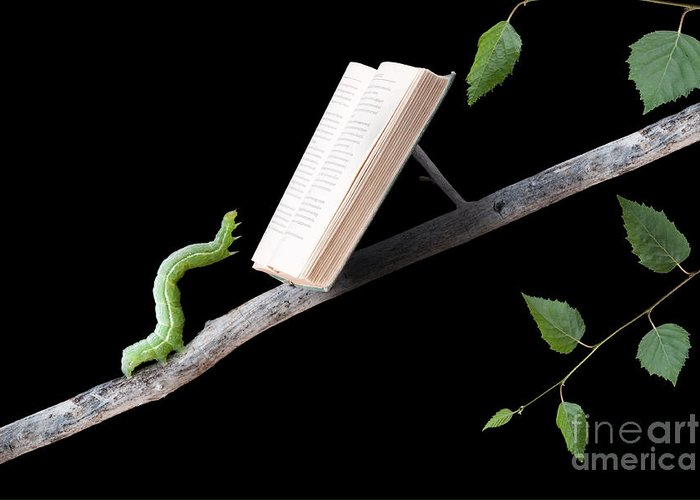 Worm Greeting Card featuring the photograph Book Worm by Cindy Singleton