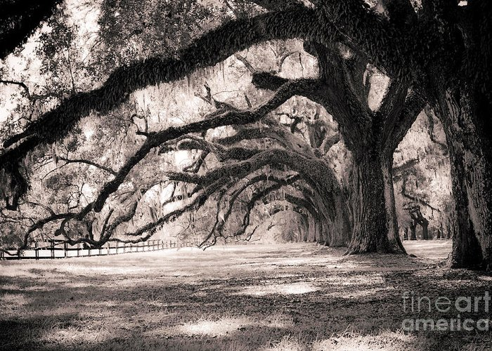 Boone Hall Greeting Card featuring the photograph Boone Hall Plantation Live Oaks by Dustin K Ryan