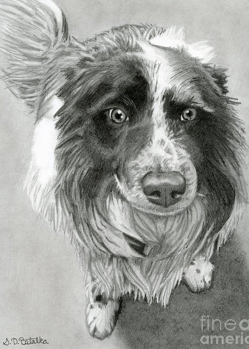 Border Collie Greeting Card featuring the drawing Border Collie by Sarah Batalka