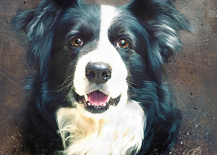 Collie Greeting Card featuring the digital art Border Collie by Tom Schmidt