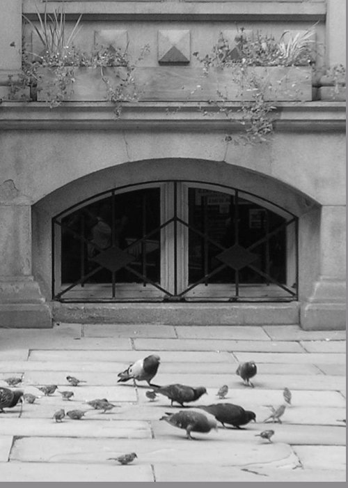 Pigeons Greeting Card featuring the photograph Boston Scene by Nancy Ferrier