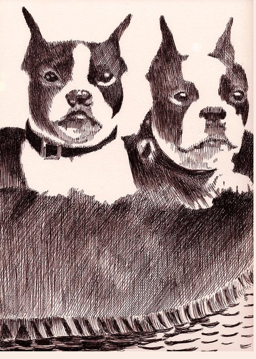 Pen Greeting Card featuring the drawing Bostons In A Basket by Robbi Musser