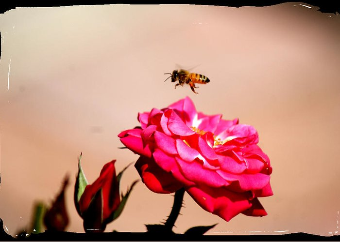 Bee Greeting Card featuring the photograph Both Beeuties by Ellen Lerner ODonnell