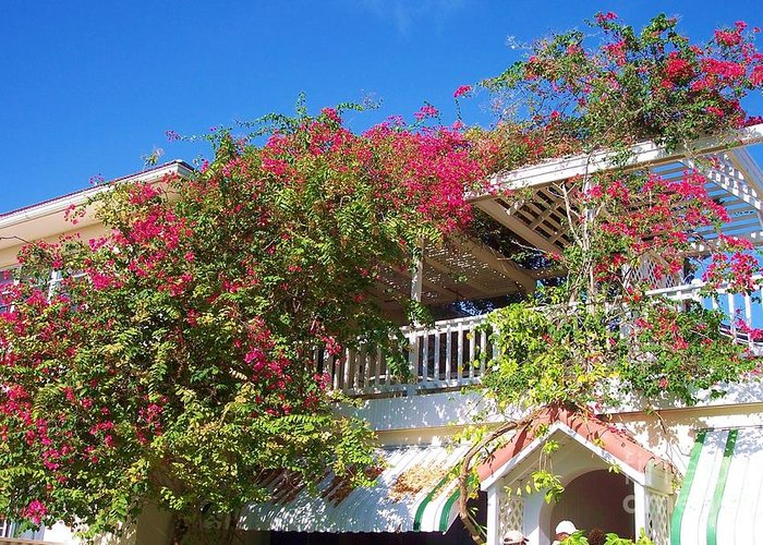 Flowers Greeting Card featuring the photograph Bougainvillea Villa by Debbi Granruth