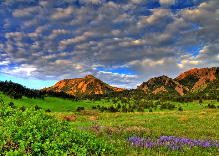 Boulder Greeting Card featuring the photograph Boulder Spring Wildflowers by Scott Mahon