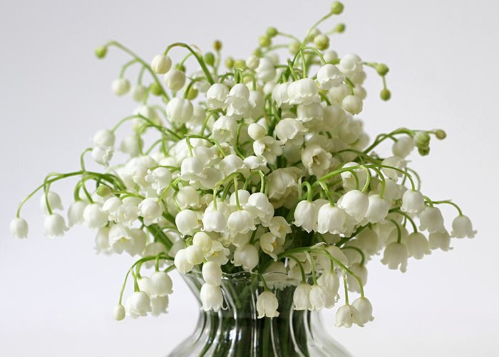 Bouquet Of Lily Of The Valley Flowers Greeting Card For Sale By