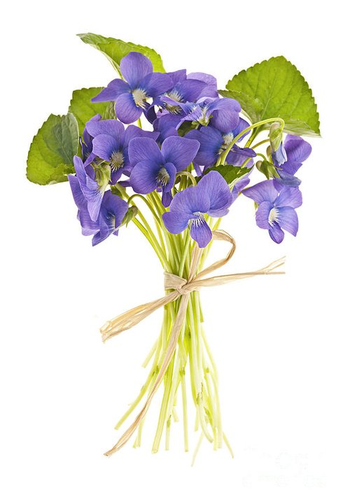 Bouquet Greeting Card featuring the photograph Bouquet Of Violets by Elena Elisseeva