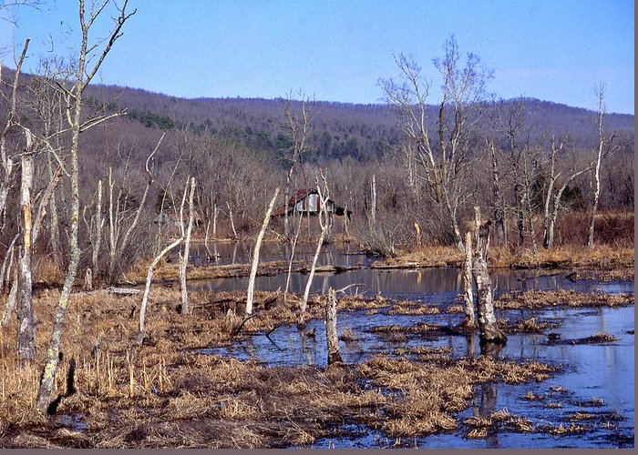 Greeting Card featuring the photograph Boxely Swamp2 by Curtis J Neeley Jr