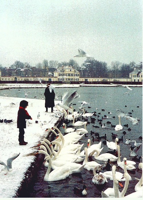 Swans Greeting Card featuring the photograph Boy Feeding Swans- Germany by Nancy Mueller
