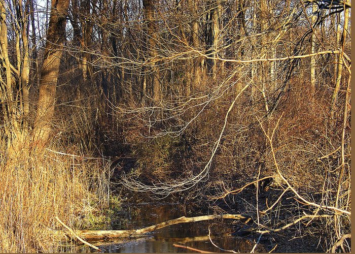 Palenville Greeting Card featuring the photograph Branches Are Nature's Strings Dancing To The Rhythm Of The Wind by Terrance DePietro