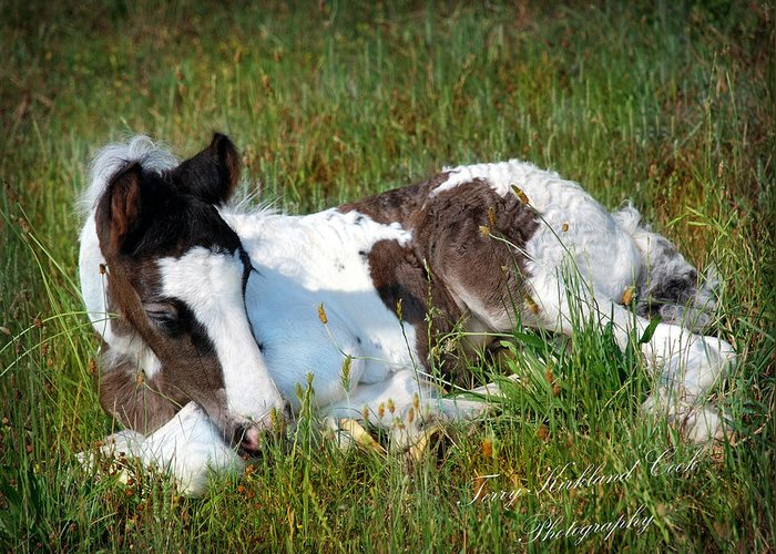 Horse Greeting Card featuring the photograph Brand New Isaac by Terry Kirkland Cook