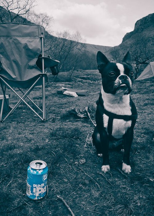 Beer Greeting Card featuring the photograph Brewdog Bull by Justin Albrecht