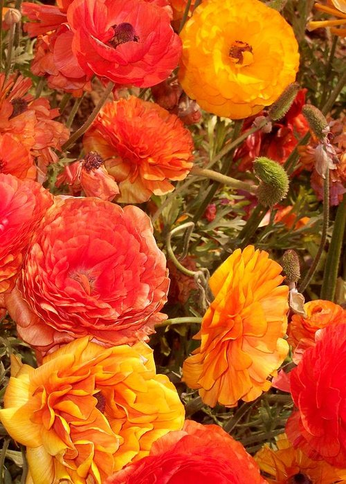 Ranunculus Greeting Card featuring the photograph Bright And Sunny by Jean Booth