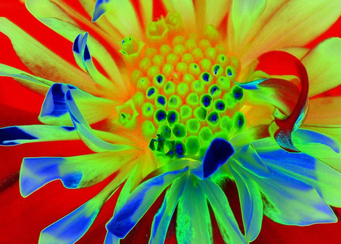 Diane Berry Greeting Card featuring the painting Bright Flower by Diane E Berry