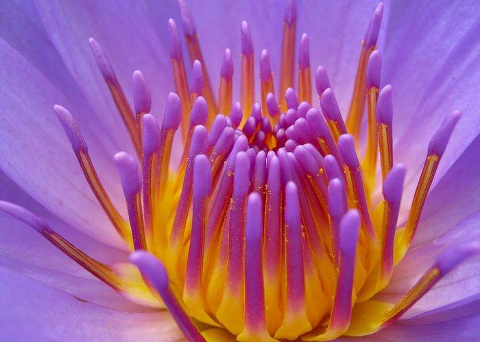 Bright Greeting Card featuring the photograph Bright Purple Lotus by Shreeharsh Ambli